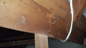 crack through timber member inside a roof found in happy valley by our building inspector.