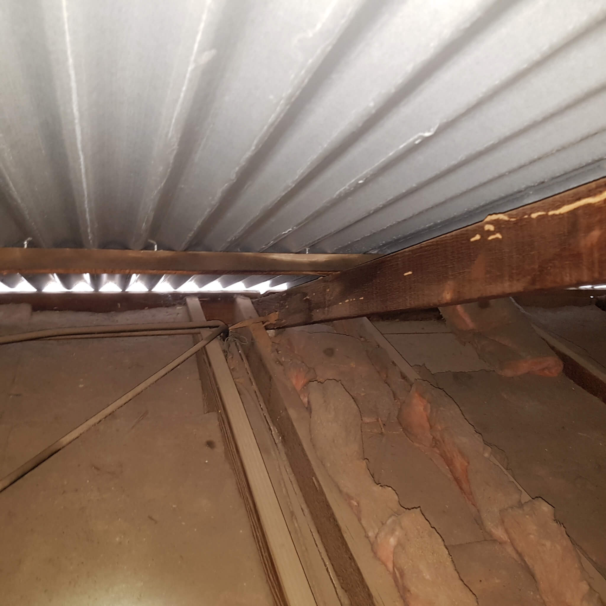 termite damage to roof