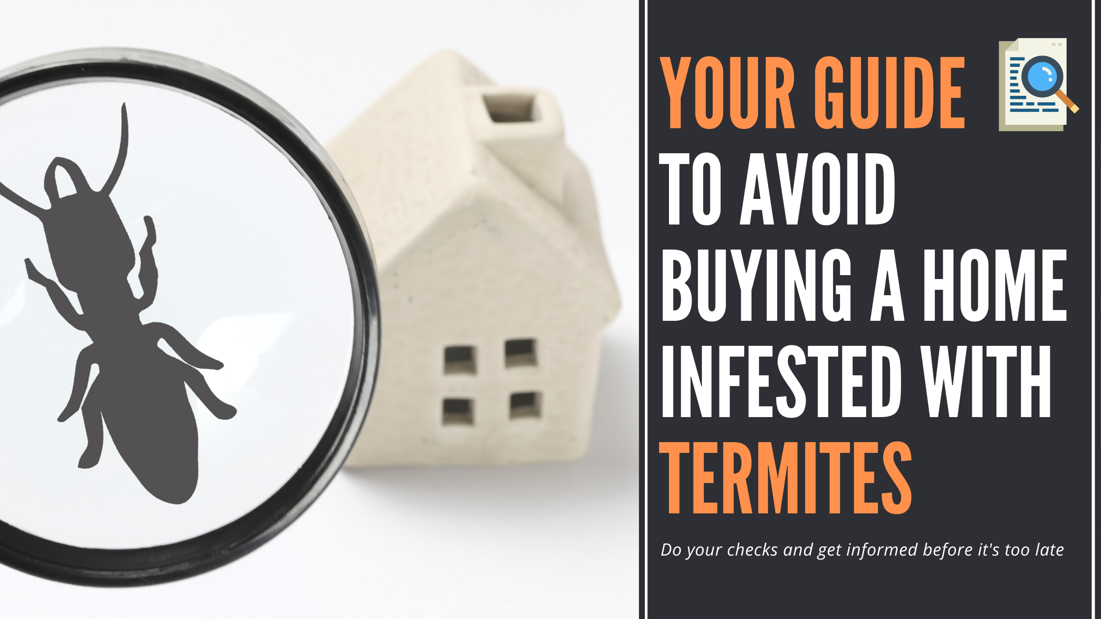 Avoid-buying-a-home-infested-with-termites blog article